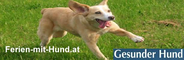 Doggie fit, Gesunder Hund im Urlaub mit Schüßler Salzen von Gabriele Steinmetz. Ferien mit Hunde, Veterinärmedizin, Hundebesitzer, Tierarzt
