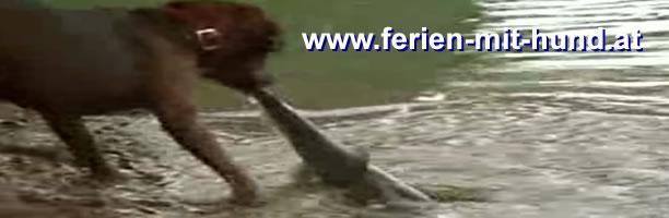 Fischen, Hund, Angeln, Fliegenfischen, Dog Fishing