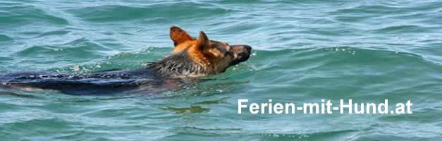 Wellness mit Hund, Wellness für sich und Ihren besten Freund - getreu dem Motto - fühlt sich Herrchen gut, Wellnessurlaub mit Hunde buchen, Hundehotels die wellness anbieten.