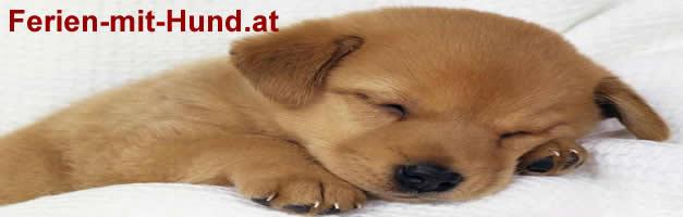 Reisen mit Hund, Hunde, Reiseangebote, Urlaub mit Hund, Ferien in Österreich, Verreisen mit Hund, Verreisen mit Hund, Reisen mit dem Hund, Ferienhaus mit Hund buchen